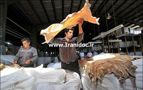 دانلود پروژه کارآفرینی تولید چرم و سالامبور از پوست گوسفند و بز